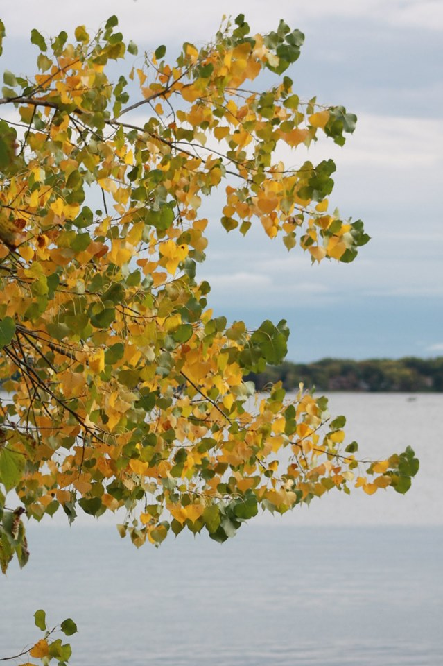 Ginny Green Autumn Tree Foreground 10-19